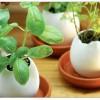 kırık yumurta görünümlü dekoratif saksı modeli