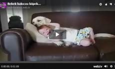 Bebek Bakıcı Köpek Çok Tatlı