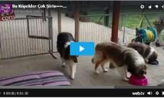 Bu Köpekler Çok Şirin