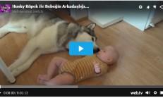 Husky Köpek ile Bebeğin Arkadaşlığı