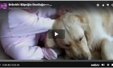 Bebekle Köpeğin Dostluğu