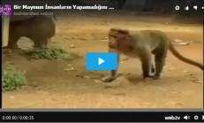 Bir Maymun İnsanların Yapamadığını Yaptı İnanılmaz Bir Video