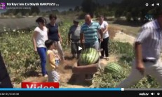 Türkiye'nin En Büyük Karpuzu 58 Kilo