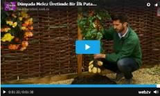 Dünyada Melez Üretimde Bir İlk Patates ve Domates Aynı Anda Üretme